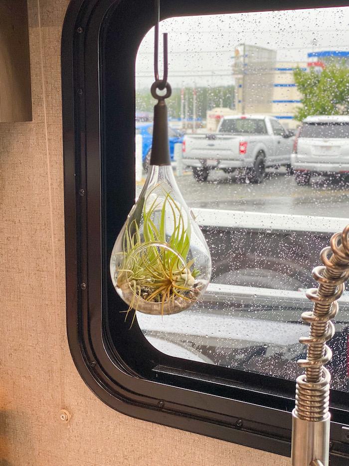 hanging air plant holder