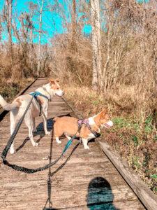 dogs on walk on boardwalk