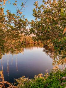 Everglades overlooking the water