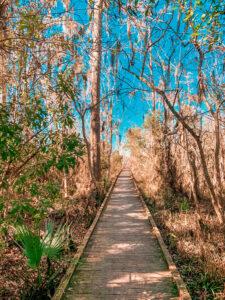Boardwalk through the swamp