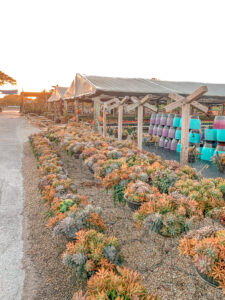 Succulent farm