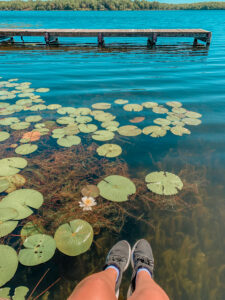 Lily pads on lake sitting on dock