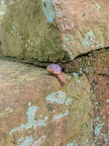 snail on a rock